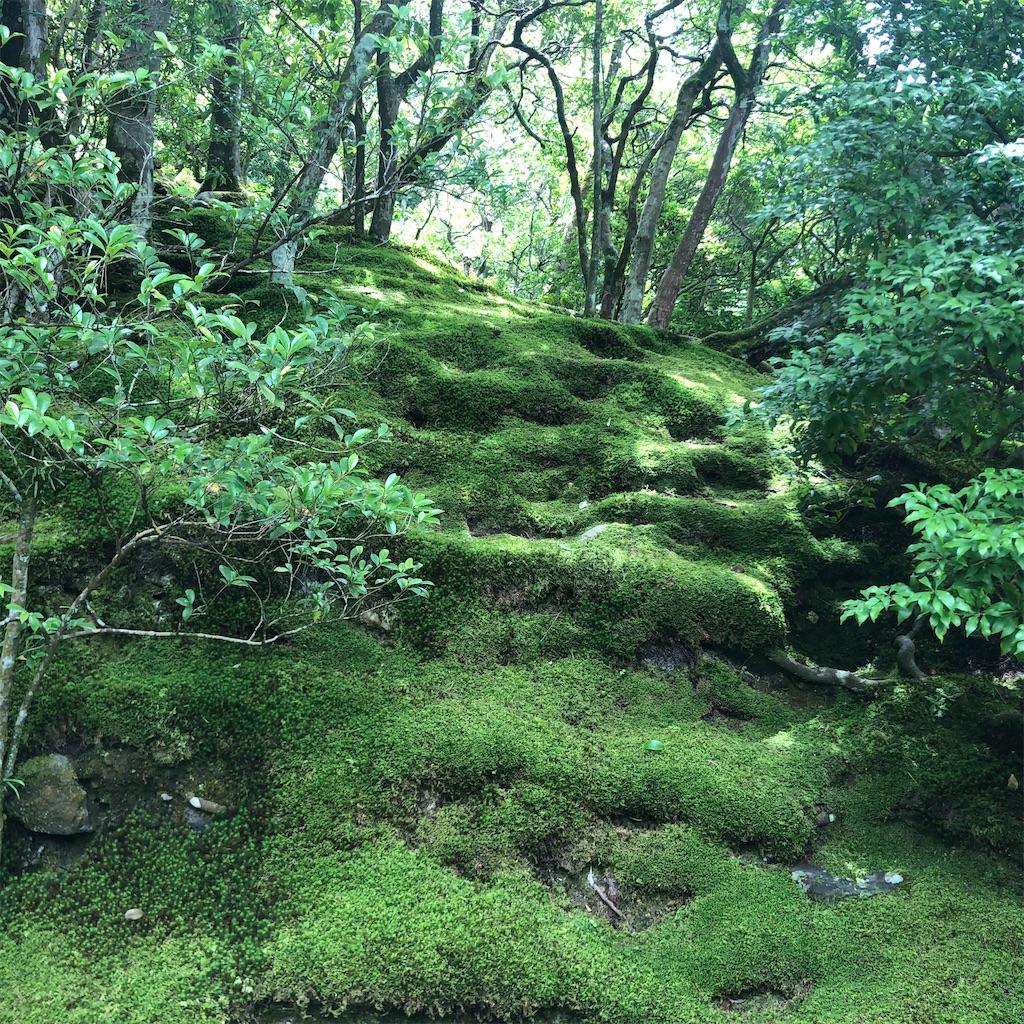 f:id:tsuji-shinkyuin:20210720083940j:image