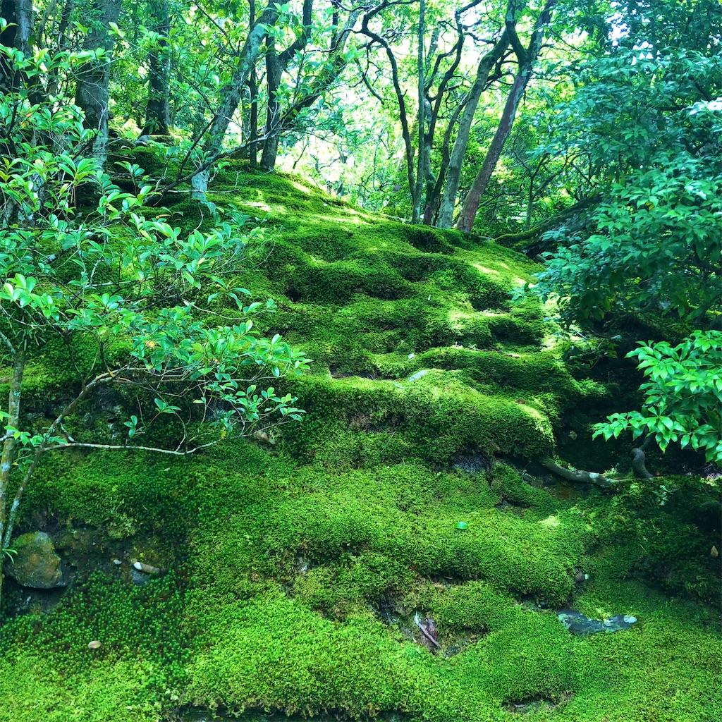 f:id:tsuji-shinkyuin:20210720083949j:image