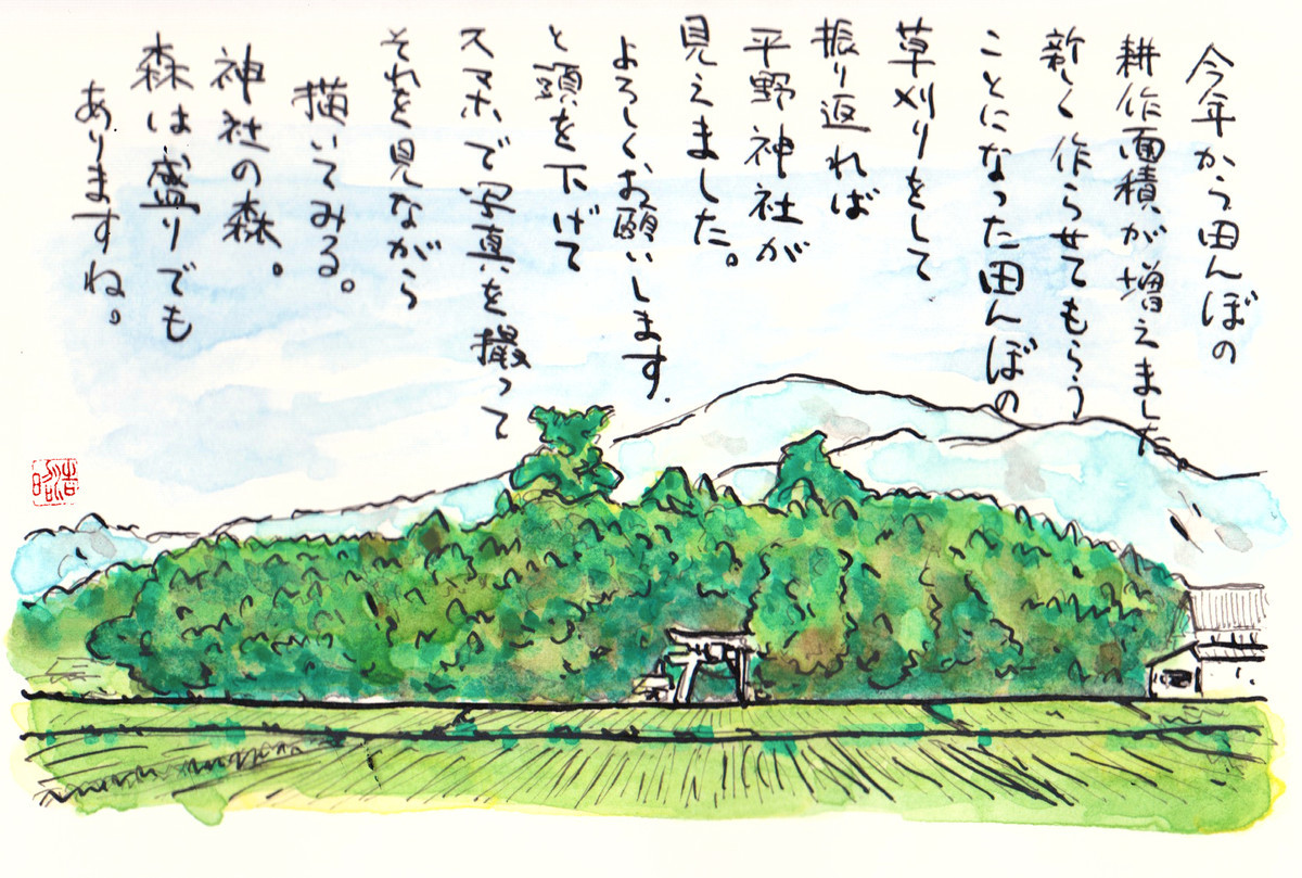 今年から田んぼの耕作面積が増えました。新しく作らさせてもらうことになった隣村のの隣村の田んぼの草刈りをして、振り返れば平野神社が正面に見えました。よろしくお願いします。と頭を下げつつ写真を撮って、その写真を見ながら描いてみた。神社の森。森は盛りでもありますね(笑)。
