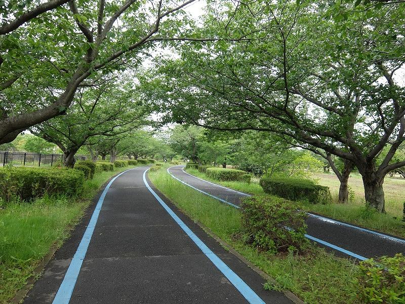 f:id:tsukasa-hide:20200531210548j:plain