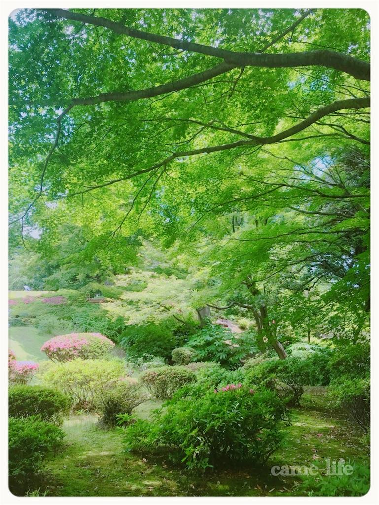 f:id:tsuki_neko:20180602194449j:image