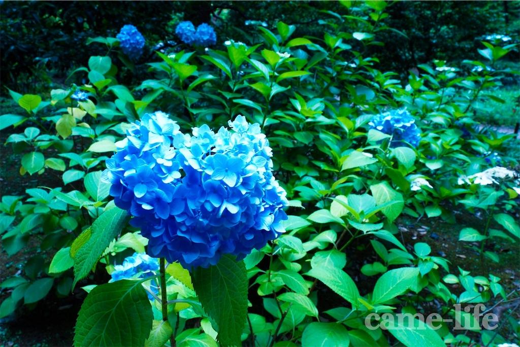 f:id:tsuki_neko:20180622200234j:image
