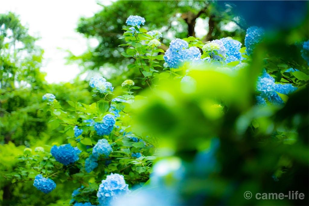 f:id:tsuki_neko:20180628174109j:image