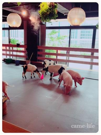 f:id:tsuki_neko:20180711091030j:image