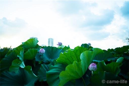 f:id:tsuki_neko:20180731175639j:image