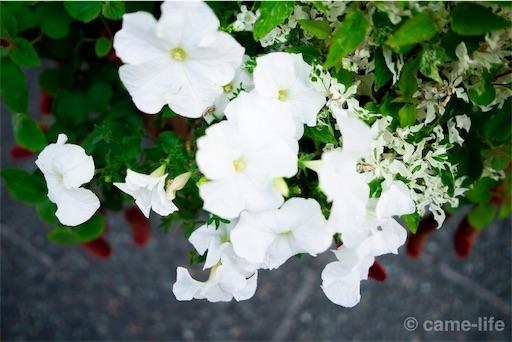 f:id:tsuki_neko:20180803184433j:image
