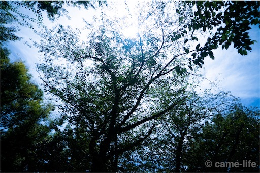 f:id:tsuki_neko:20180816160621j:image