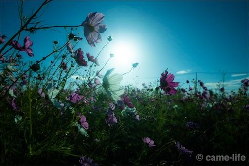 f:id:tsuki_neko:20181111220735j:image