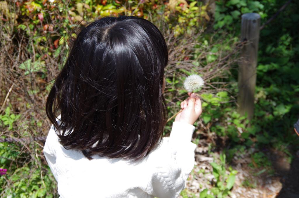 f:id:tsukifune77:20170507190005j:plain