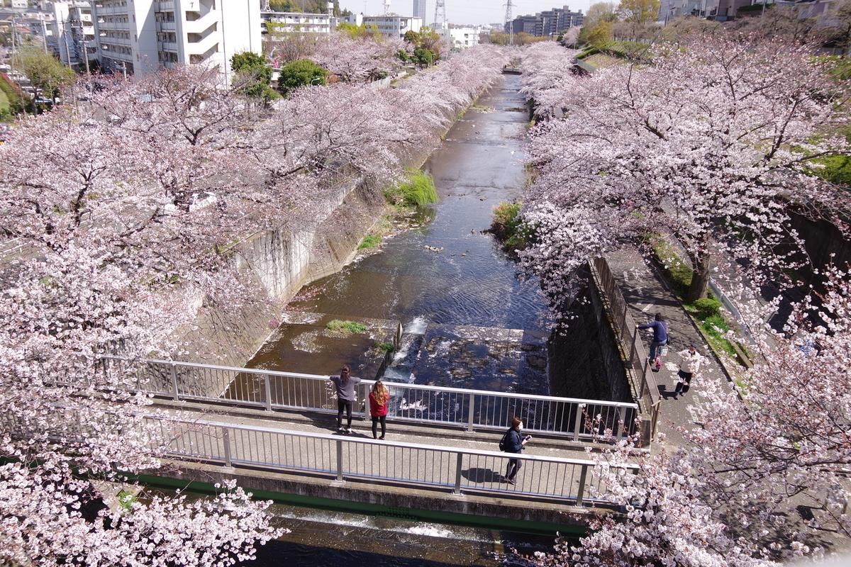 f:id:tsukifune77:20190408184447j:plain
