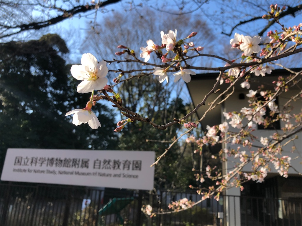 f:id:tsukikageya:20210315204220j:image