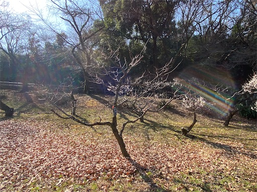 f:id:tsukimeguri:20210207172914j:image
