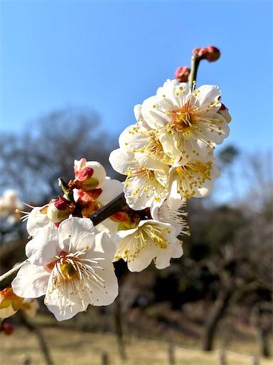 f:id:tsukimeguri:20210207174504j:image