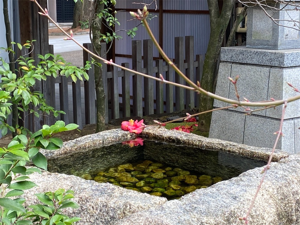 f:id:tsukimeguri:20210324122003j:image