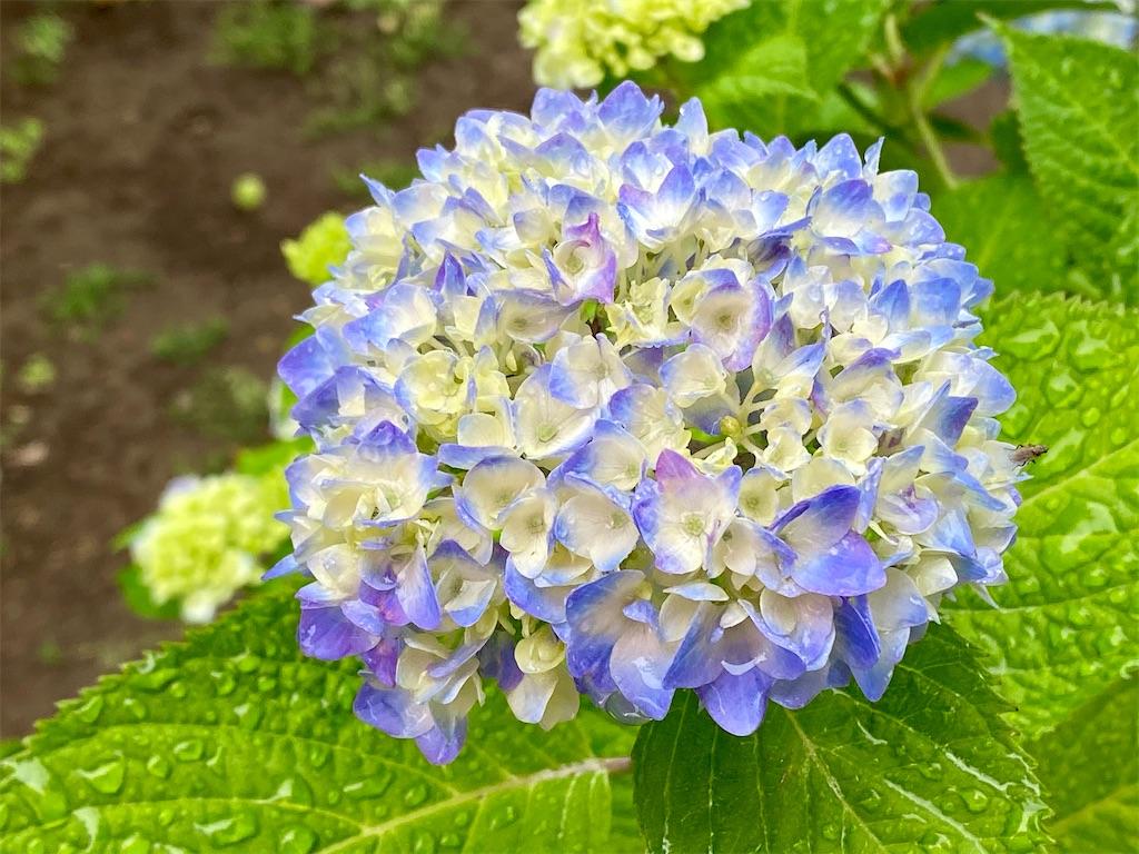f:id:tsukimeguri:20210513132417j:image