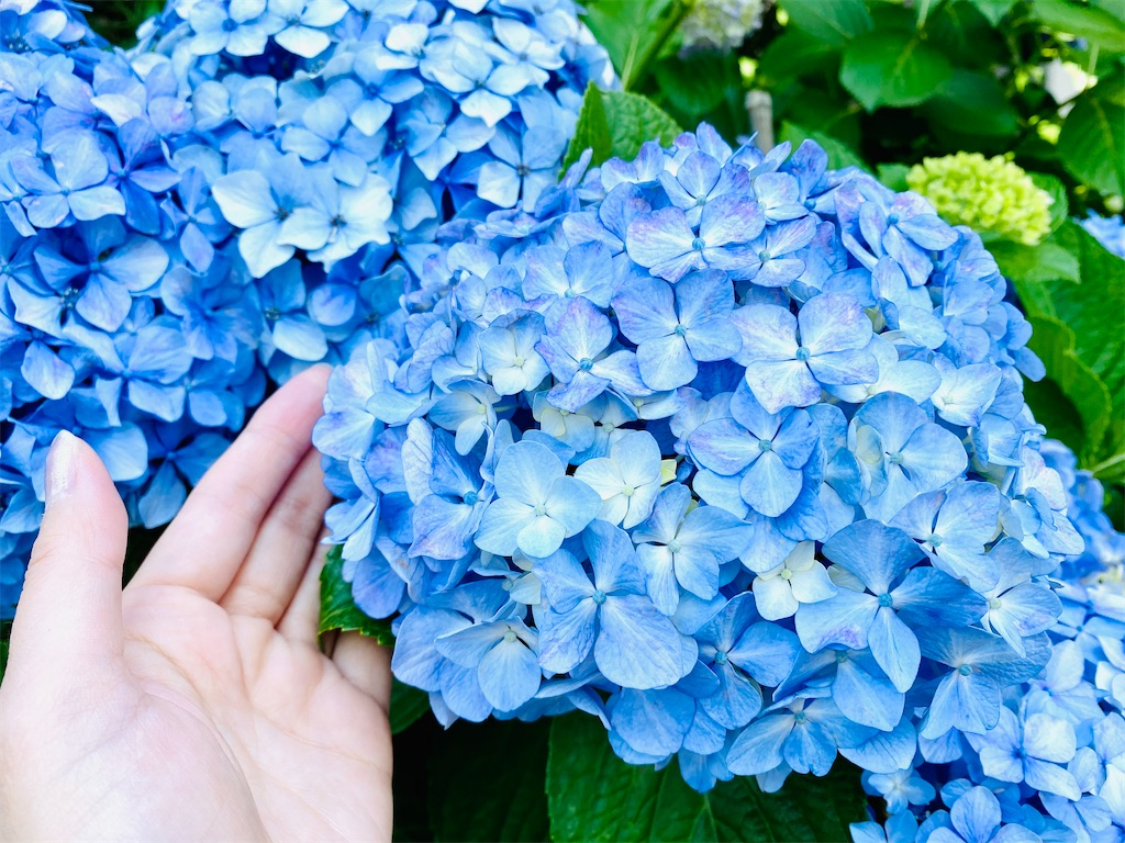 f:id:tsukimeguri:20210608111119j:image