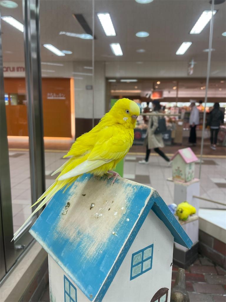 f:id:tsukimi3190:20210423195315j:image