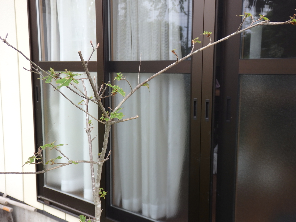 f:id:tsukimorisou:20210606130302j:plain