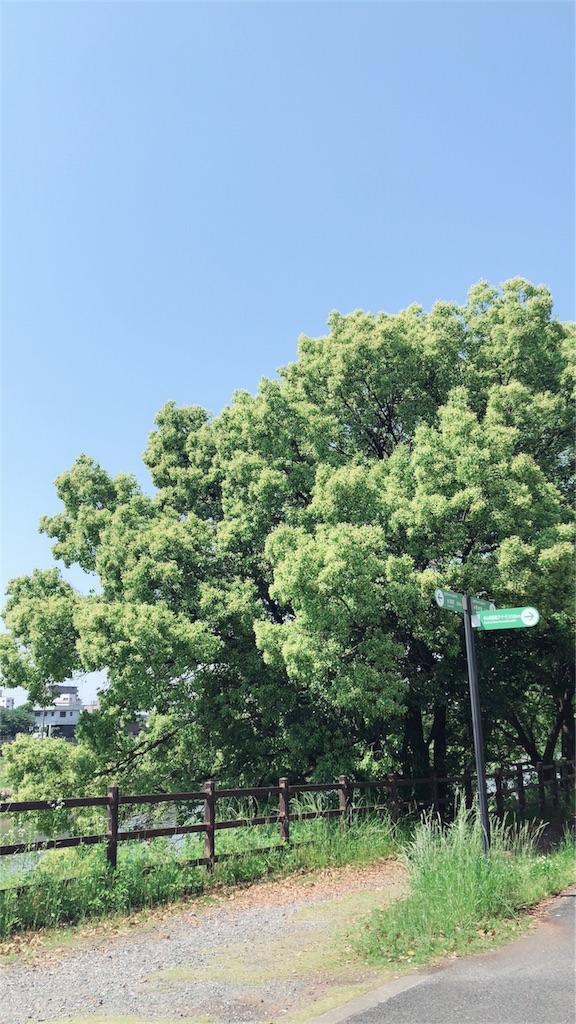 f:id:tsukinoki20150127:20180430165630j:image