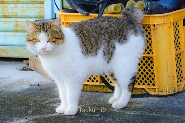 f:id:tsukumiitan:20210211003105j:image