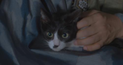 今川義元に抱かれる猫