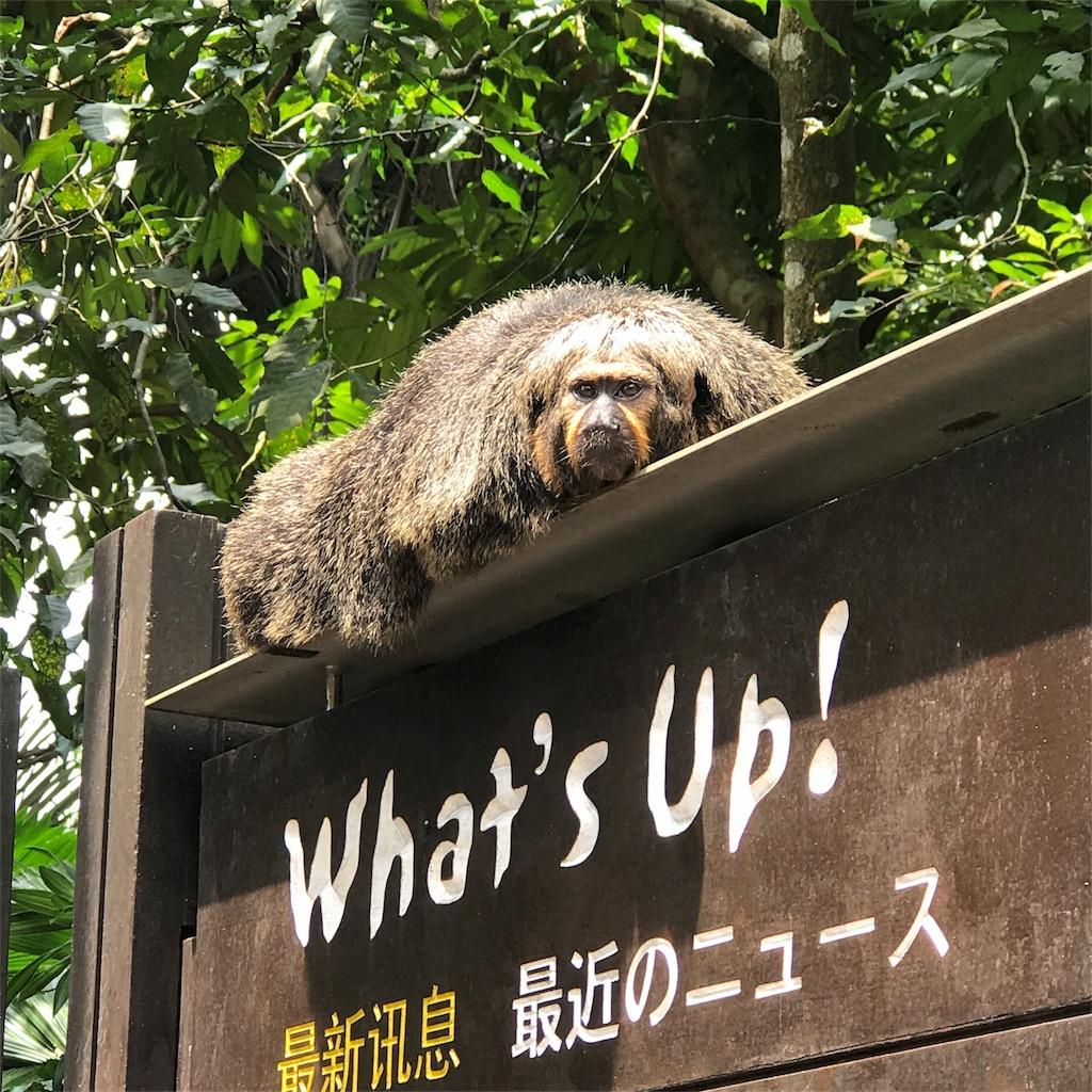f:id:tsumasaki47:20170826170536j:image