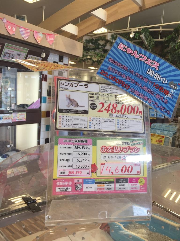 f:id:tsumashir0chan:20190222120142j:image