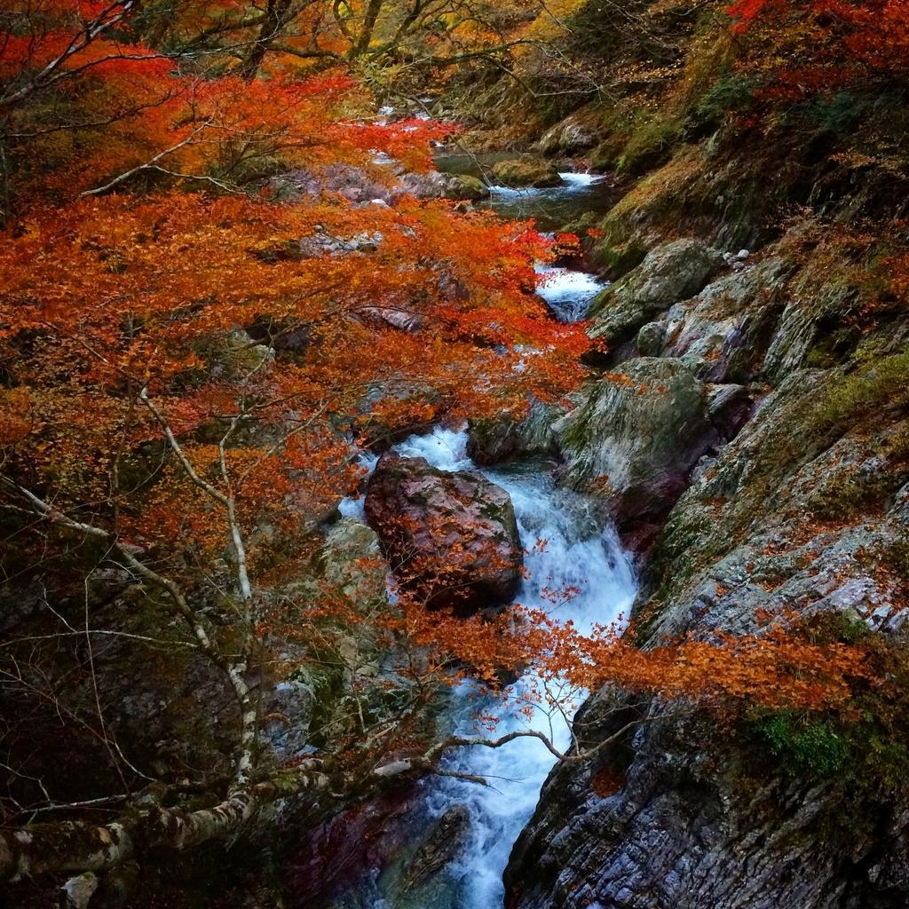 小田深山の紅葉