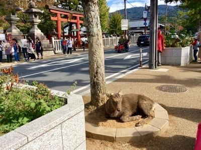 f:id:tsumekotto:20181113200106j:plain