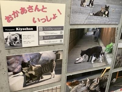 f:id:tsumekotto:20200329231445j:plain