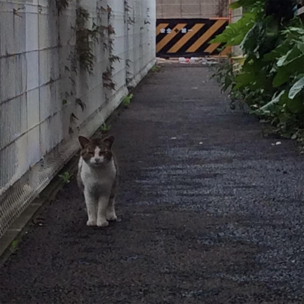 f:id:tsumetaimizuburo:20161016232122j:image