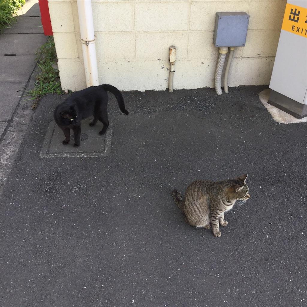 f:id:tsumetaimizuburo:20170325223152j:image