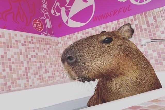 原宿かわいい動物園 動物カフェ クーポン
