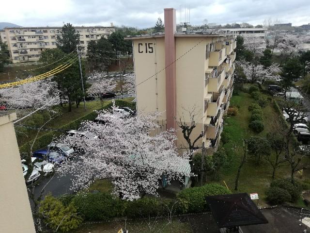 f:id:tsumugidayo:20170410184223j:image