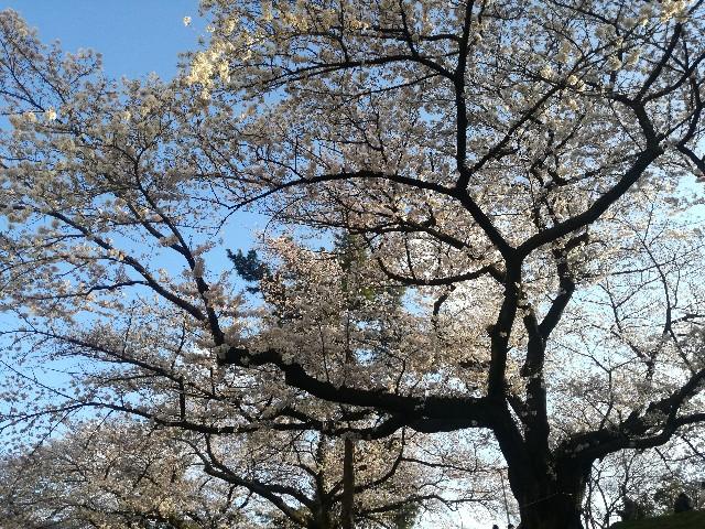 f:id:tsumugidayo:20170410184412j:image