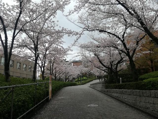 f:id:tsumugidayo:20170410192619j:image