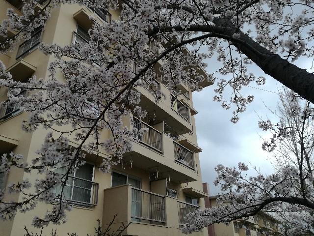 f:id:tsumugidayo:20170410195333j:image