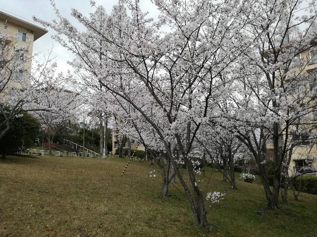 f:id:tsumugidayo:20170410195408j:image
