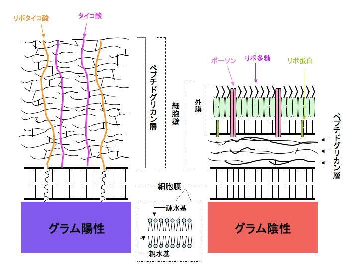 f:id:tsunepi:20140205210253j:plain