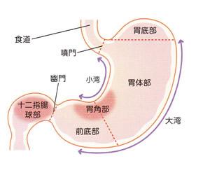 画像 : 胃の構造と働き 【胃に詳しくなる雑学】 - NAVER まとめ