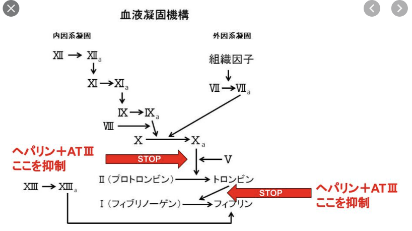 f:id:tsunepi:20210216101818p:plain