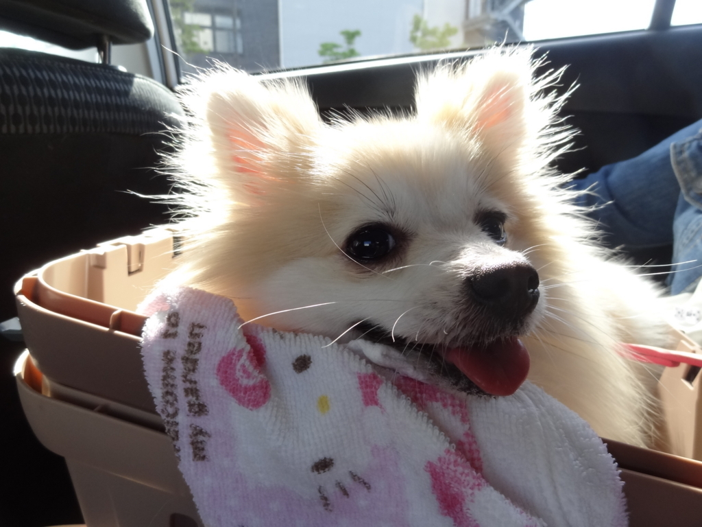 f:id:tsuri_thanks:20180510194601j:plain