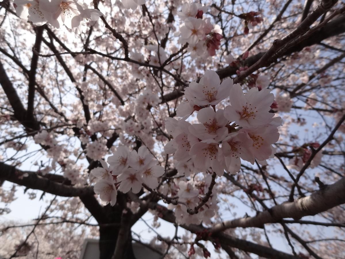 f:id:tsuri_thanks:20190415192152j:plain