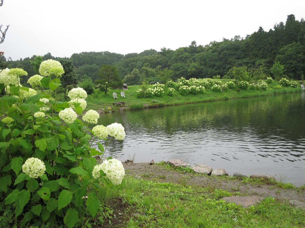 f:id:tsuritengoku:20160628101723j:plain