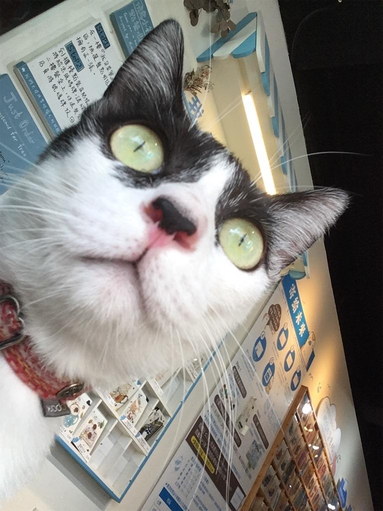 f:id:tsuritsuri:20190914085751j:image