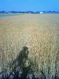 f:id:tsuru-585:20100606205018j:image