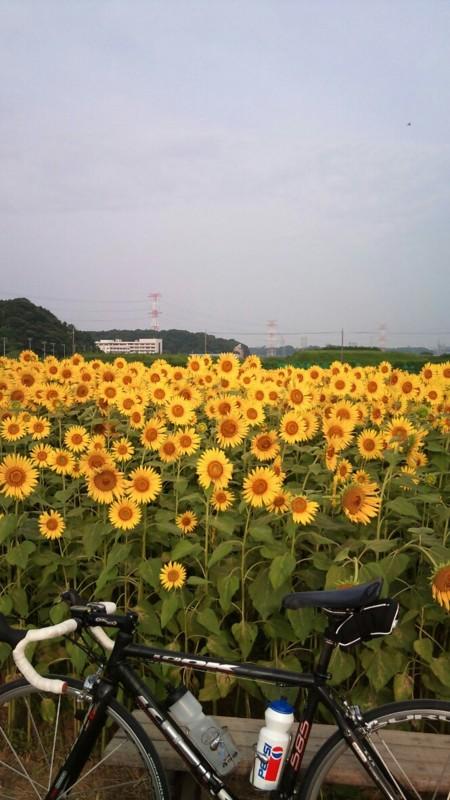f:id:tsuru-585:20100816202426j:image