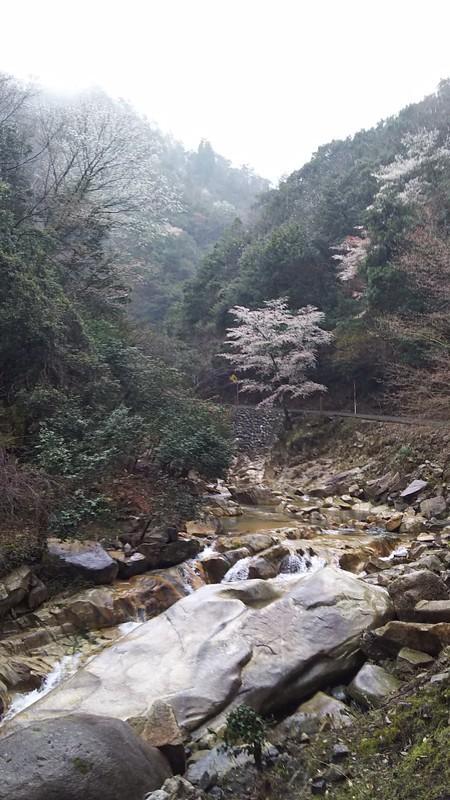 f:id:tsuru-585:20190414185455j:plain