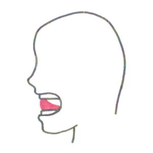 4技能英語教育研究家、鶴岡俊樹オフィシャルブログ 「L」発音時の口の形
