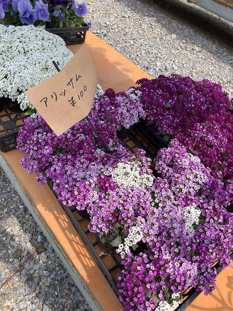 f:id:tsururiko:20200418112730j:image